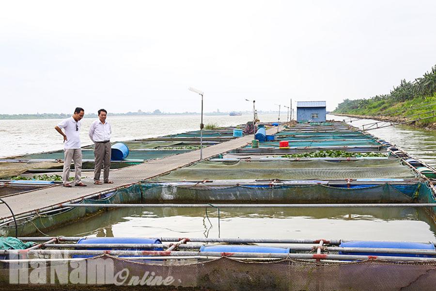 Giữ an toàn cho lồng bè nuôi cá trên sông Hồng trong mùa mưa bão lũ