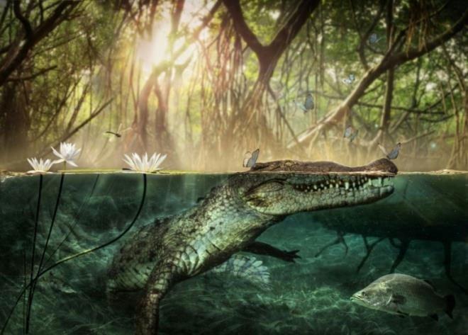 Bất ngờ với nguồn gốc châu Phi của cá sấu Mỹ