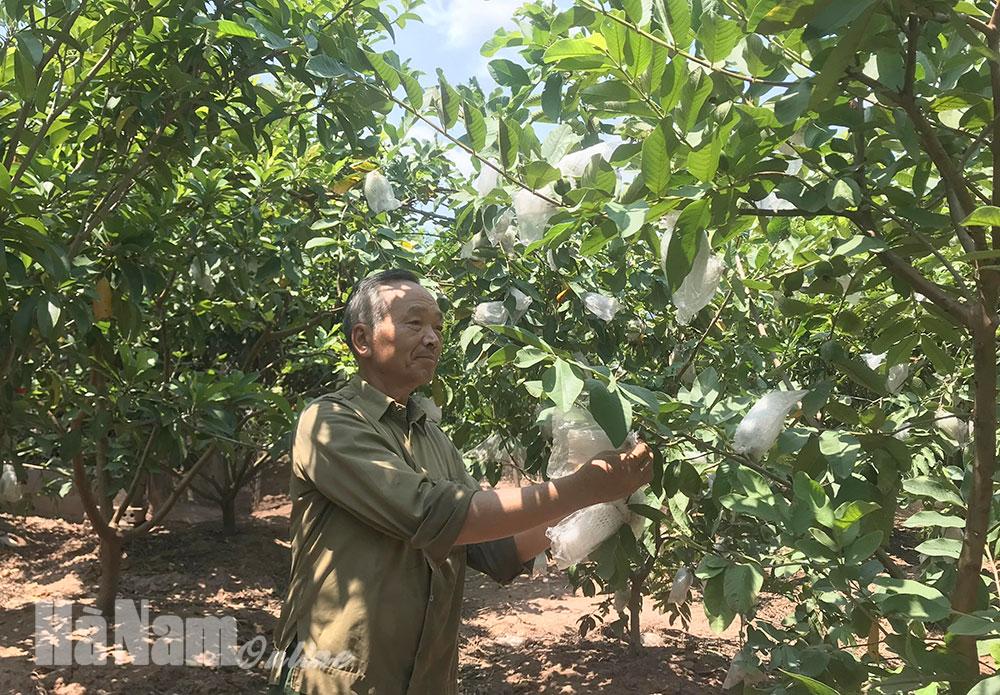 Hợp Lý đẩy mạnh đa dạng hóa ngành nghề nông thôn