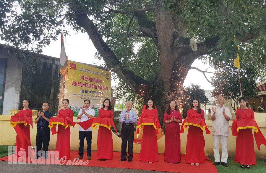 """Cây đa đền Thượng xã La Sơn được công nhận """"Cây di sản Việt Nam"""""""