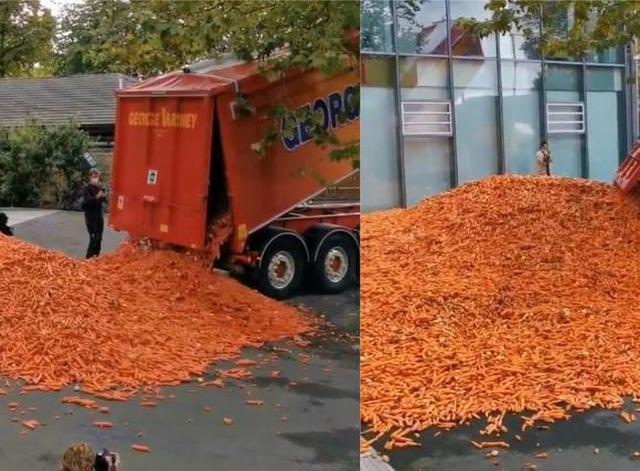 Đổ ra đường 29 tấn cà rốt để làm nghệ thuật