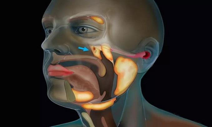 Phát hiện cơ quan mới ở cổ họng