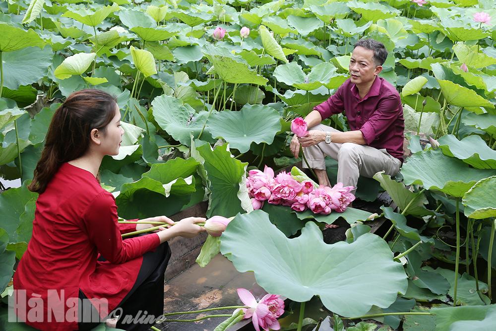 Sản xuất nông nghiệp gắn với phát triển du lịch trải nghiệm