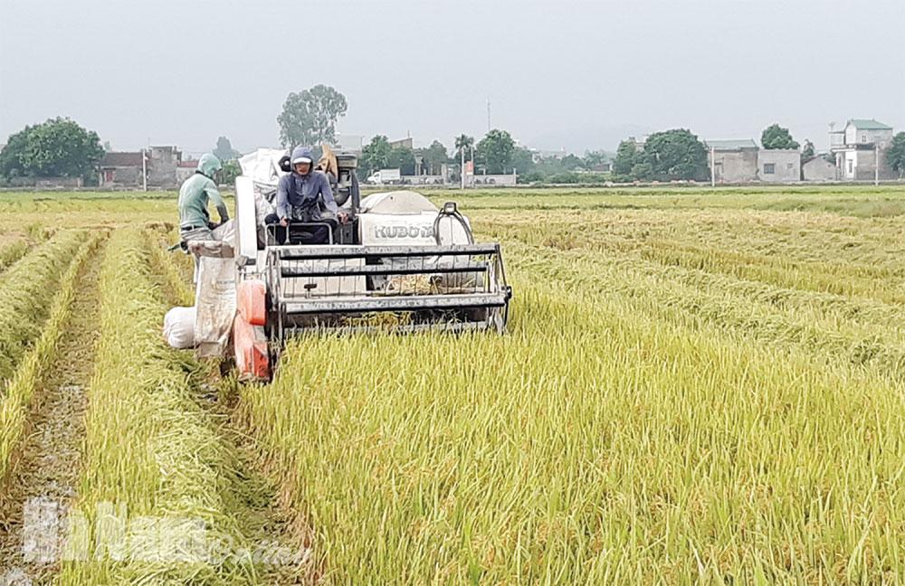 Xây dựng nền nông nghiệp hàng hóa
